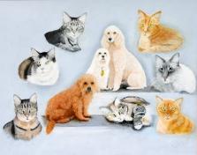 Carl's Photo of Neumann's Cats Desk Top
